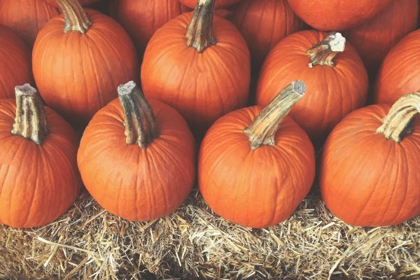 4 Fun Fall Events In and Around Union, New Jersey