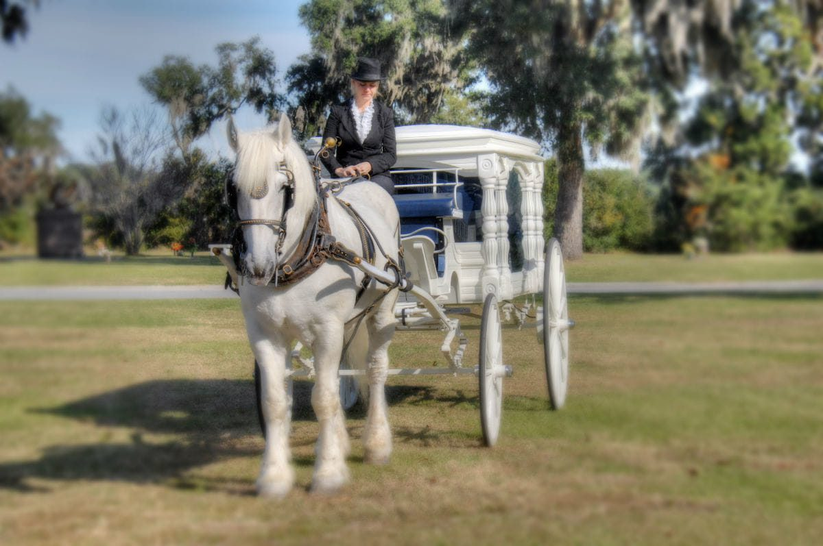white horse with female driver and white carriage
