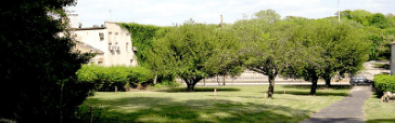 Trees in front of burial ground